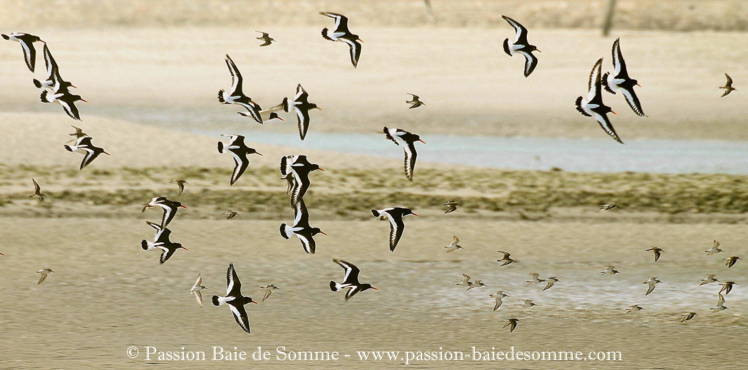 Passion-Baie-de-Somme