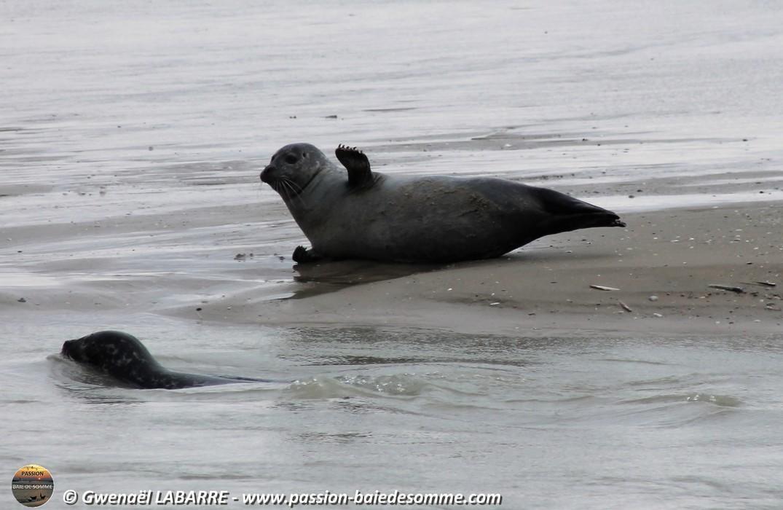 Observation des phoques avec Passion Baie de Somme