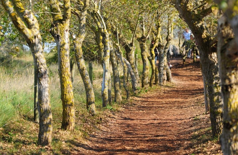 parc_marquenterre_arbres_somme_picardie © F Leonardi CDSomme