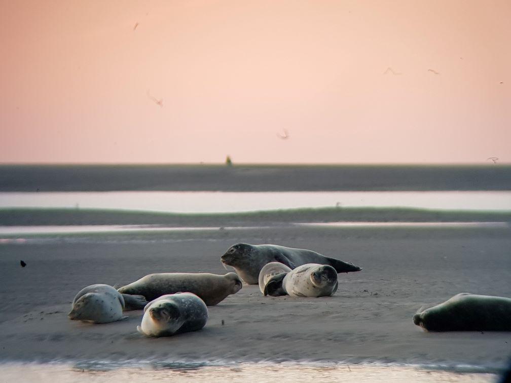 Phoques de la Baie
